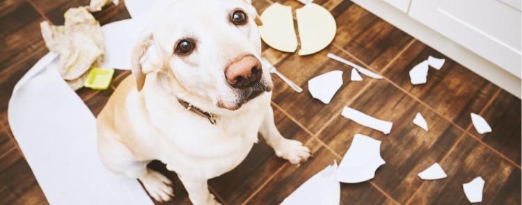 Hundehaltung kann nicht einfach per Beschluss verboten werden