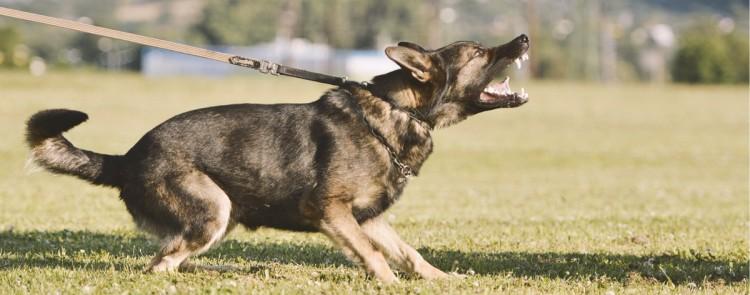 """""""Typische Tiergefahr"""" vom eigenen Hund mindert Schadensersatz für Hundebiss"""