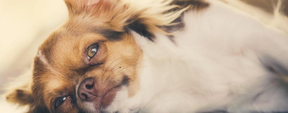 Trennung: Können Hunde einem Ehepartner zugewiesen werden?