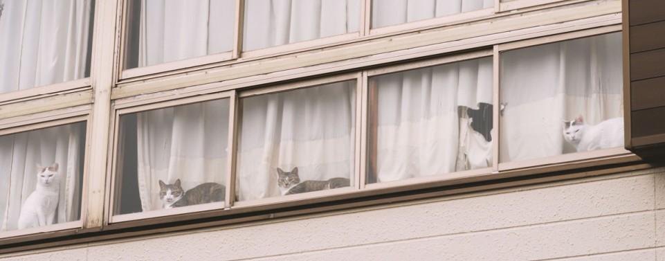 Vielzahl leidender Katzen und Hunde rechtfertigt Tierhalteverbot