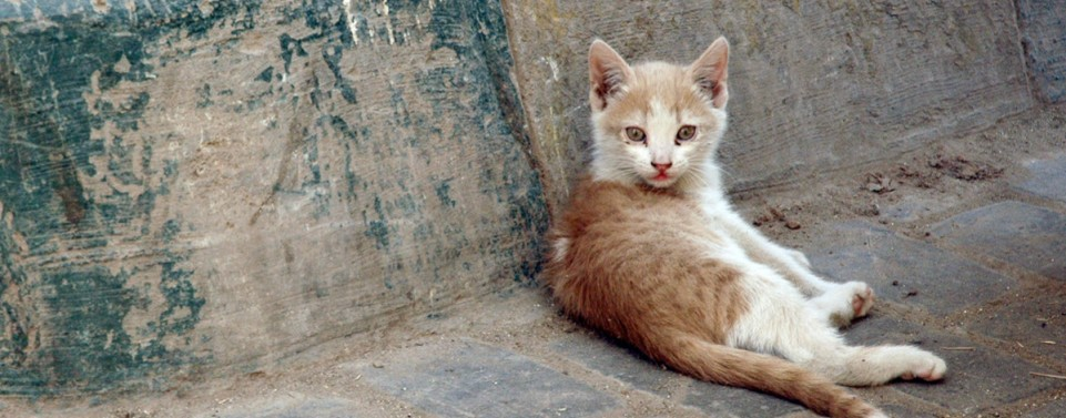 Wer bezahlt den Tierarzt für die Behandlung von Fundkatzen?