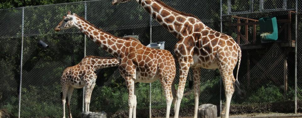 Wer haftet für Verletzungen eines Zoobesuchers an einer Trennscheibe vor einem Gehege?