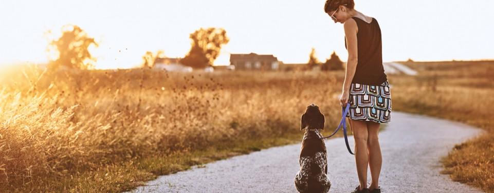 Tieraufsicht aus Gefälligkeit: Wer haftet für die Folgen unangeleinten Gassigehens?