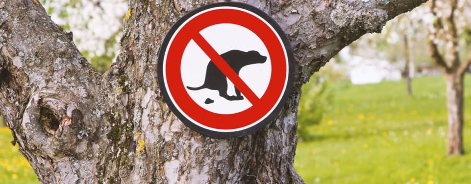 Tierhalter muss für die Beseitigung von Hundehaufen aufkommen