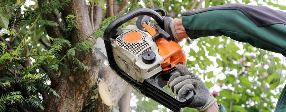 Ist ein Nachbarbaum nicht mehr standsicher, muss er ausnahmsweise gefällt werden