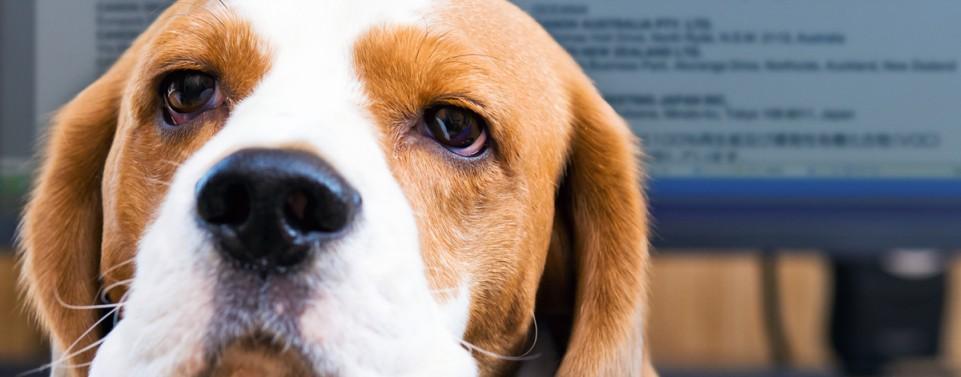 """Keine Eilentscheidung in der Frage: """"Hund im Büro zulässig?"""""""