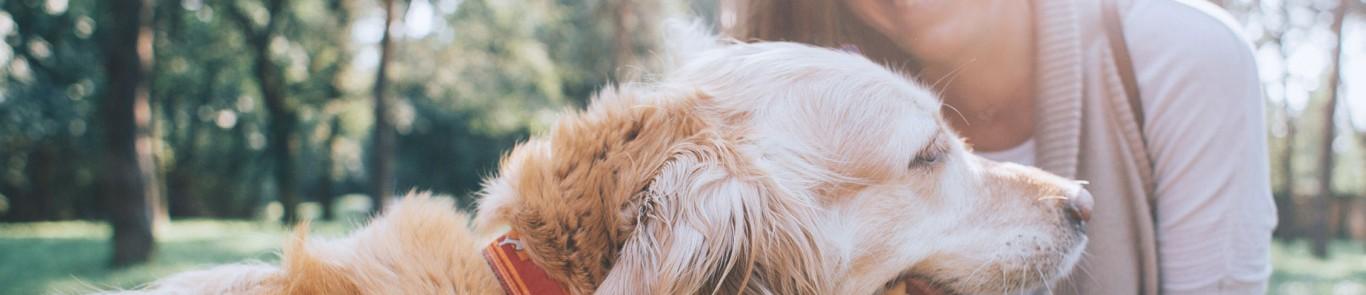 Streitfall Haustier Was Sie Als Tierhalter Wissen Sollten